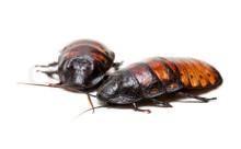 Many I have seen have mites, do these?