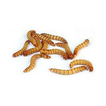 are these live meal worms?  Are you in Reno, Nv where I could pick them up?