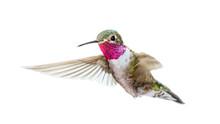 Organic Hummingbird Food Questions & Answers